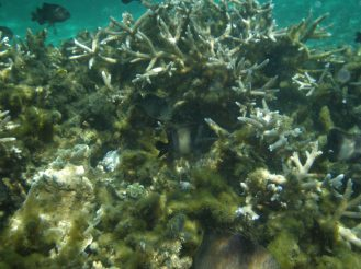 Unterwasserwelt Mauritius - Erfahrungen