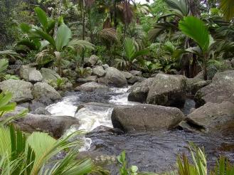 Natur Seychellen Erfahrung Ales Consulting International