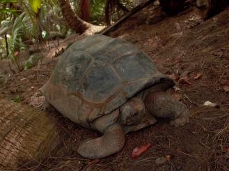 Seychellen Riesenschildkröten - Auslandspraktikum Erfahrung Ales Consulting International