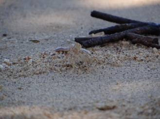 Krabbe am Strand - Thailand