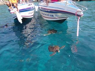 Schwimmende Schildkröten Thailand Praktikum Ales Consulting International