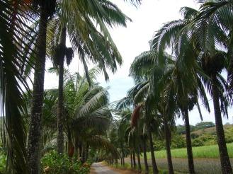 Mauritius Ausflug auf die Insel - Erfahrungsbericht
