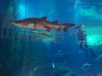 Aquarium Dubai Mall - Praktikumserfahrungen