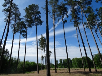 Wälder in Deutschlands Norden