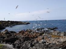 Exkursion Lanzarote / Orzola Island Hopping