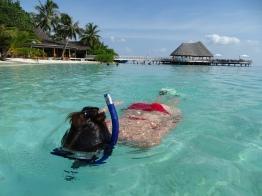 Erfahrung Riff Schnorcheln auf den Malediven - Nannette Neubauer Ales Consulting International