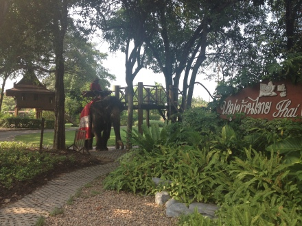 Elefanten Reiten im Rosengarten Bangkok Erfahrung