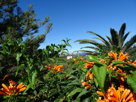 Isla Bonita La Palma Erfahrung Ales Consulting International