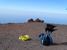 Rabe beim Picknick Check - La Palma - entdeckt by Ales Consulting International