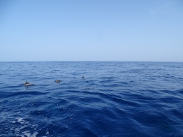 Bootstour mit Delphinen - La Palma - Kanaren Island Hopping