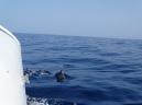 Dolphin Watching La Palma - Insel Hopping Kanaren