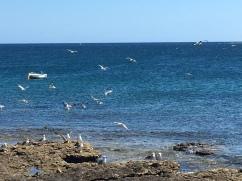 Möwen Lanzarote Ausflug ans Meer Ales Consulting International