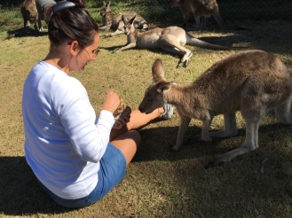 Känguru füttern in Brisbane - Nannette Neubauer - Ales Consulting International