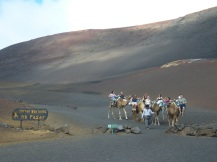 lanzarote-2017-ales-consulting-international-kamelsafari