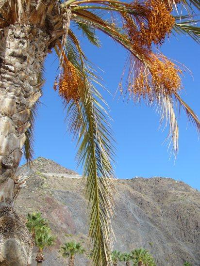 teneriffa-palmen-strand-und-meer-praktikumsbericht