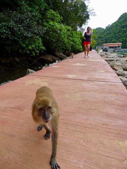 Affen Geoforest Park Malaysia Island Hopping Nannette Neubauer
