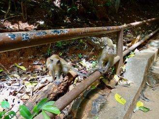 Affeninsel Malaysia Exkursion