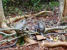 Affenfamilie Tipps Exkursion Ales Consulting International