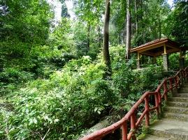 Ales Consulting International Geopark Regenwald Exkursion