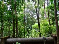Geoforest Park Langkawi
