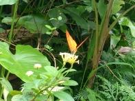 Malaysia Kuala Lumpur Schmetterlingspark