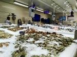 Shrimps shoppen Mall of Emirates