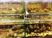 Fresh Seafood Malaysia