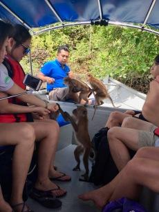 Affen füttern Inseln Malaysia