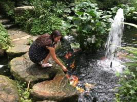 Koi Fische Schmetterlingspark Kuala Lumpur