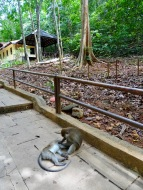 Monkey Island Hoppin Ales Consulting International