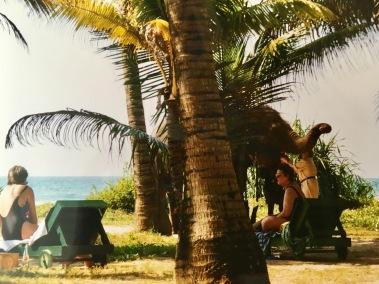 Sri Lanka Elefanten am Strand