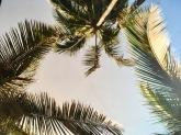 Sri Lanka Hotelpraktikum Ales Consulting International