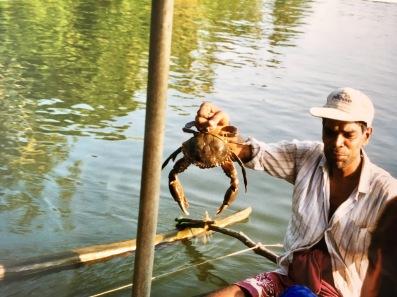 Krabbenfischer Sri Lanka