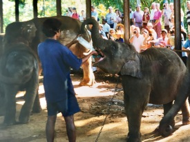 Elefanten Waisenhaus Sri Lanka Ales Consulting International