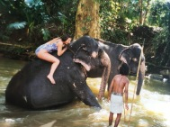 Sri Lanka mit Elefanten Baden Ales Consulting International