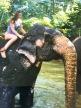 Elefanten reiten Sri Lanka Nannette Neubauer