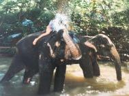 Sri Lanka mit Elefanten Baden Auslandspraktikum