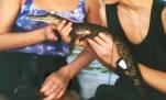 Sri Lanka Krokodil Baby