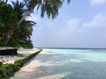 Praktikum Malediven Ales Consulting International
