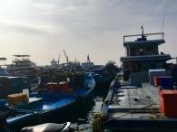 Male Fieschereihafen