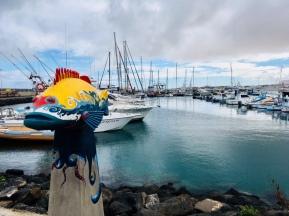 Fuerteventura Corralejo Praktikum