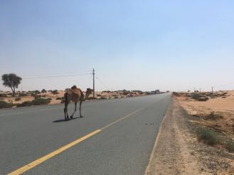 Vereinigte Arabische Emirate auf Erfolgskurs