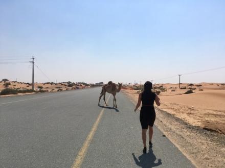 Vereinigte Arabische Emirate Ales Consulting International