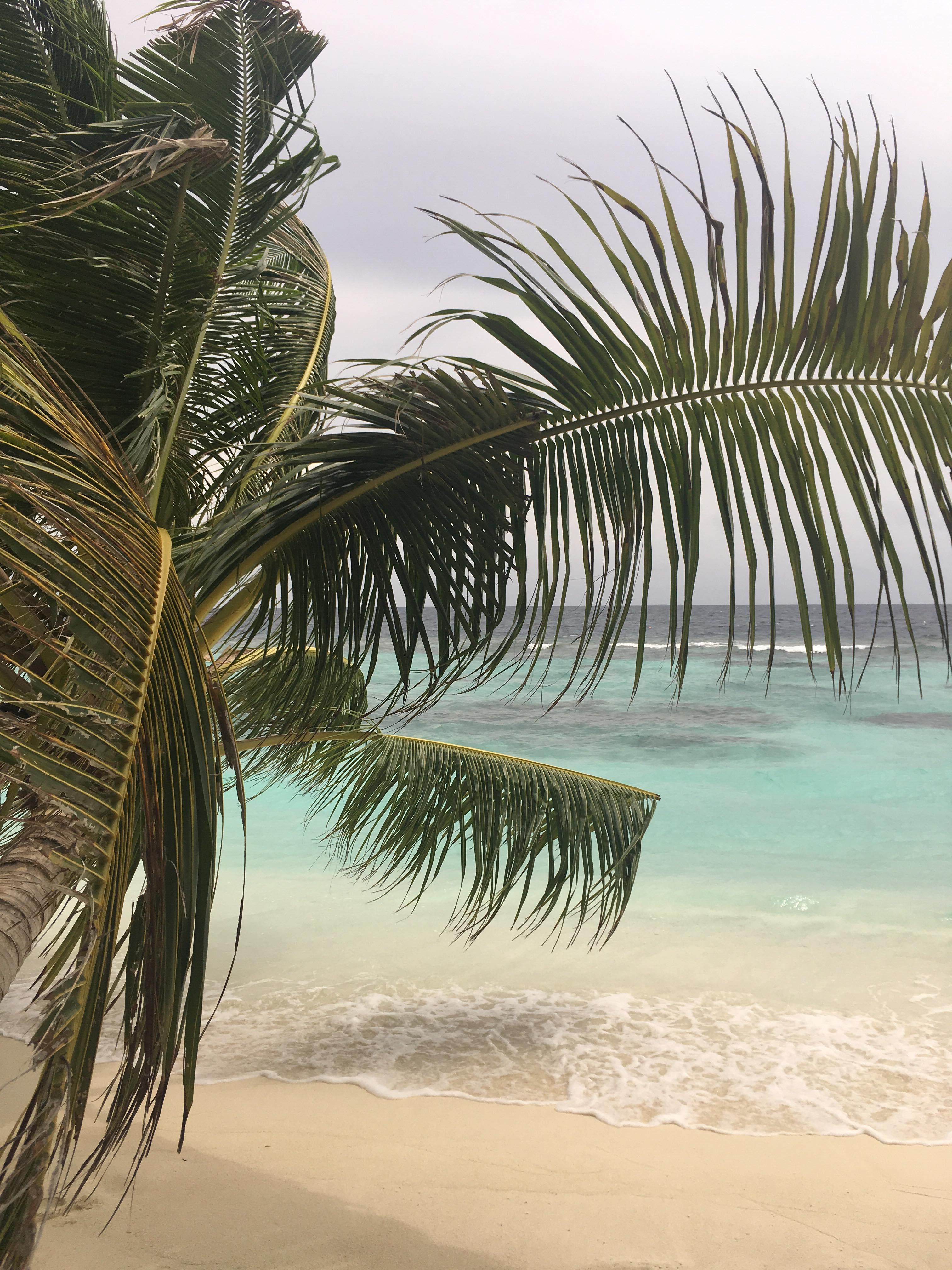 Erfahrungen Malediven Praktikum Ales Consulting International