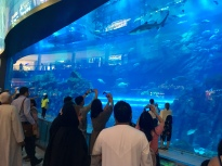 Dubai Aquarium tauchen - Mall of the Emirates