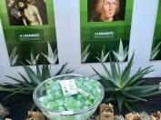 Typisch Kanarisch - Aloe Vera Produkte