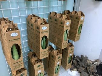 Organic - Lanzarote - Aloe Vera