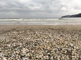 Muscheln suchen an der Ostsee - bester Strand