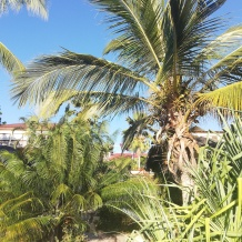 Exotic Palm trees on Zanzibar