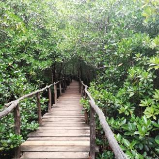 Auf in den Regenwald - Jozani Forrest Zanzibar